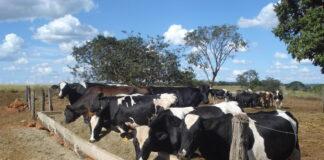 Prática exige atenção e planejamento por parte dos pecuaristas para oferecer qualidade aos animais