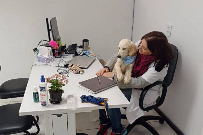 Cão da PM auxiliará em programa de saúde mental de profissionais da segurança